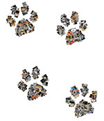 Paw prints picture collage